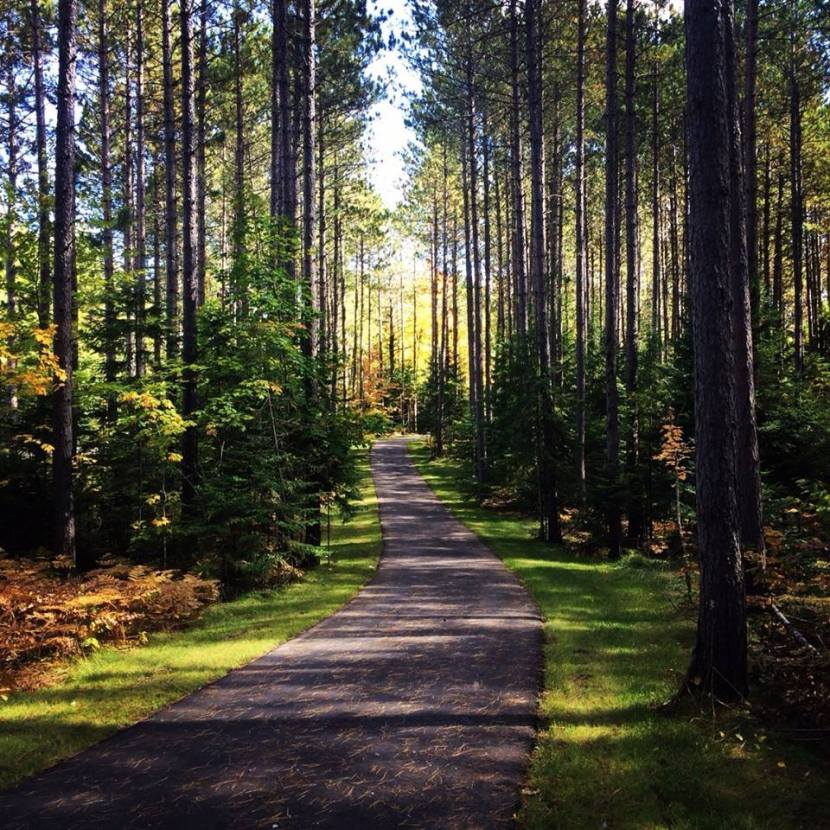 A secluded paved trail in the woods.