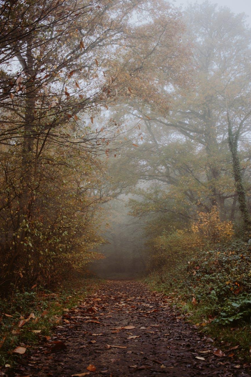 narrow path between autumn trees in mist