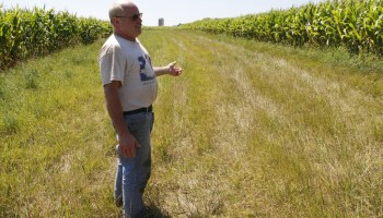 Kewaunee County dairy farmer Chuck Kinnard walks a grassed waterway on his land, built to keep runoff from contaminating groundwater. Like many farmers here, he is acutely aware of what a thin layer of soil protects the bedrock below.