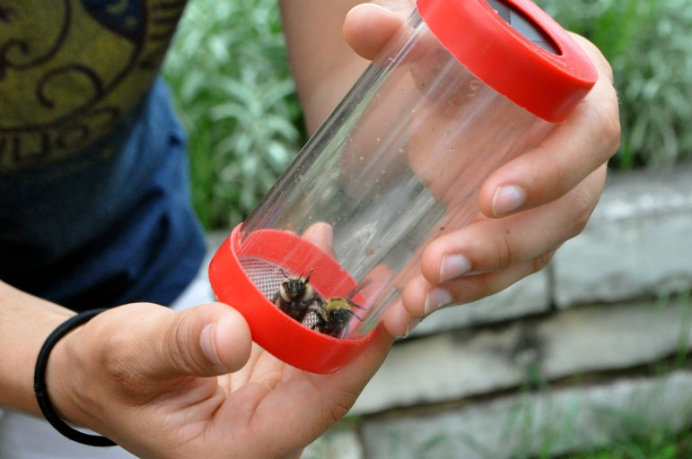 Two bees are captured and identified during the 2015 Bee Fest at the University of Wisconsin-Madison Arboretum in June. Wisconsin is proposing a plan to protect bees, but some critics question whether it does enough to discourage pesticide use tied to bee colony die-offs.
