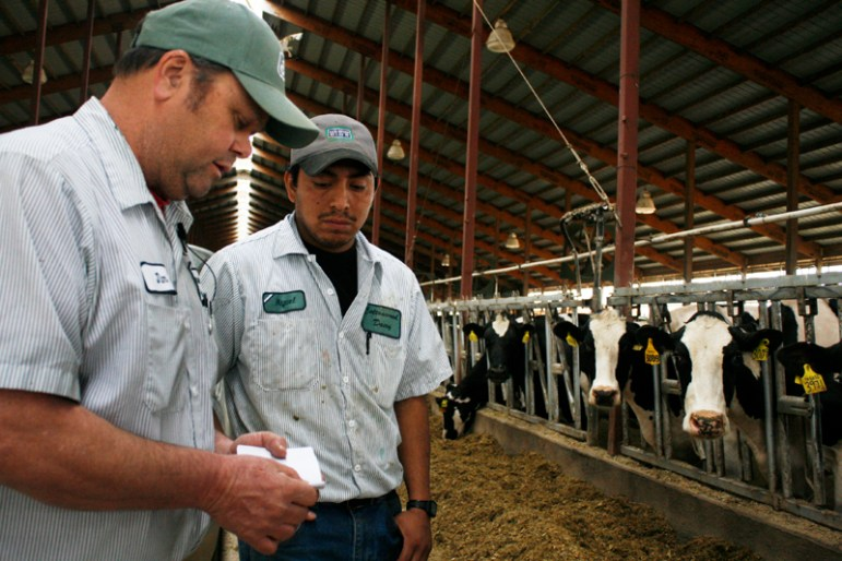 Darlington, Wis., dairy owner James Winn says he relies on Latino immigrants to run his large farm. Hispanic workers are a crucial part of Wisconsin's signature dairy industry. Latinos also make up roughly 6.4 percent of the state's population; voter turnout among this group is generally low.