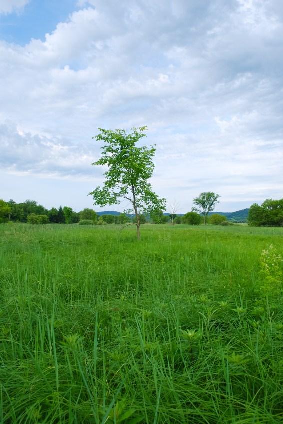 Sedge Meadow
