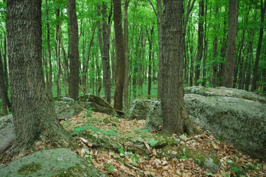 Outcropping in Summer
