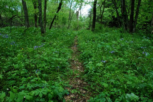 Trail through Ephemerals