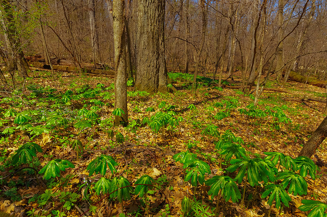 Forest & Ephemerals