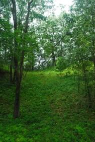Bluff Forest