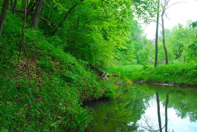 Chase Creek