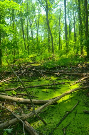 Forest & Swamp