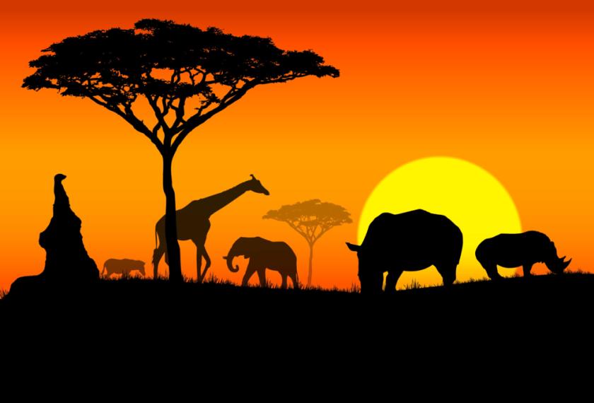 digital history of modern Africa
