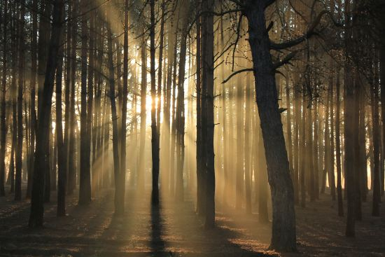 child of God light through trees