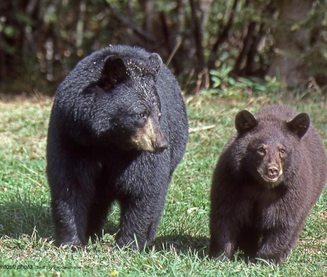 Bearcubsepr1999img051