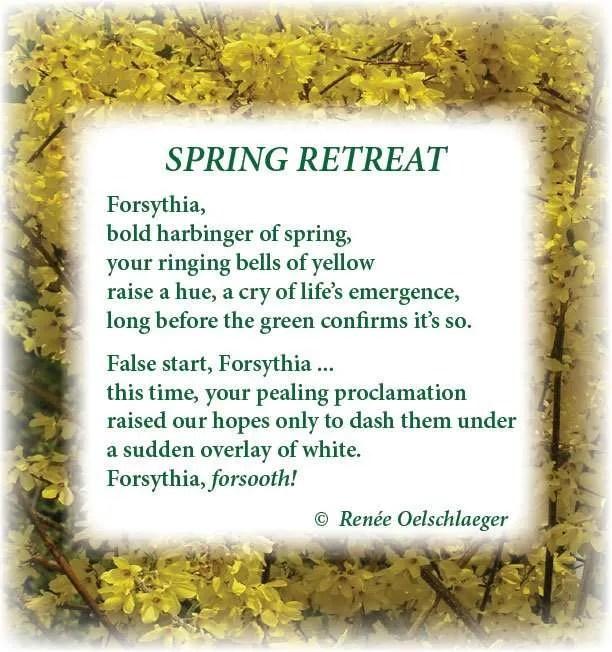 Spring-Retreat, forsythia, Spring, harbinger of Spring, light verse, poetry, poem