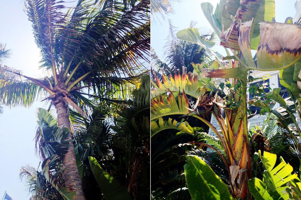 palm leaf bowls