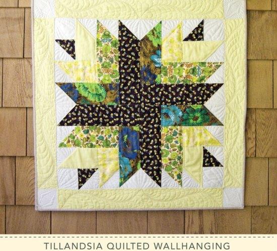 Tillandsia wallhanging