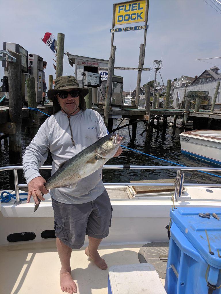A big Bluefish