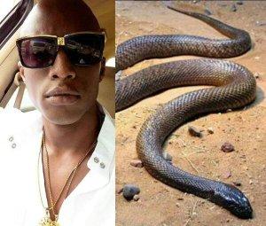 OAP N6 Raises Alarm Over Poisonous Snakes That Have Invaded Lekki