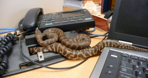 2 Black Snakes Chase President Out Of Office