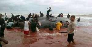 Whale Butchered In Okpoama, Bayelsa State (Video)