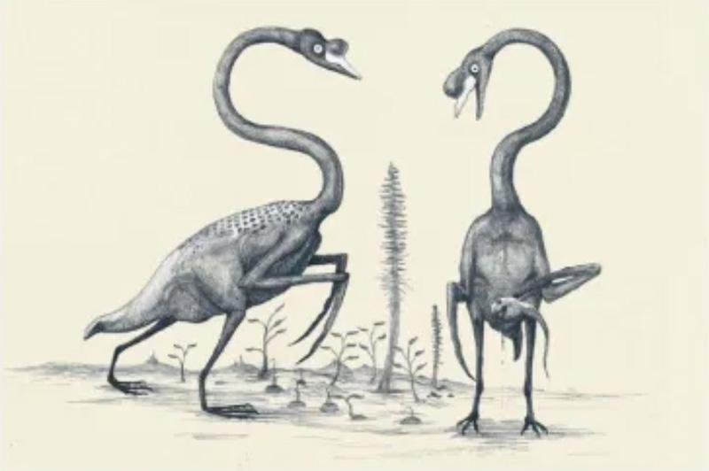 Así se verían unos cisnes dibujados sólo basándonos en los huesos, como se hace comúnmente con los dinosaurios: