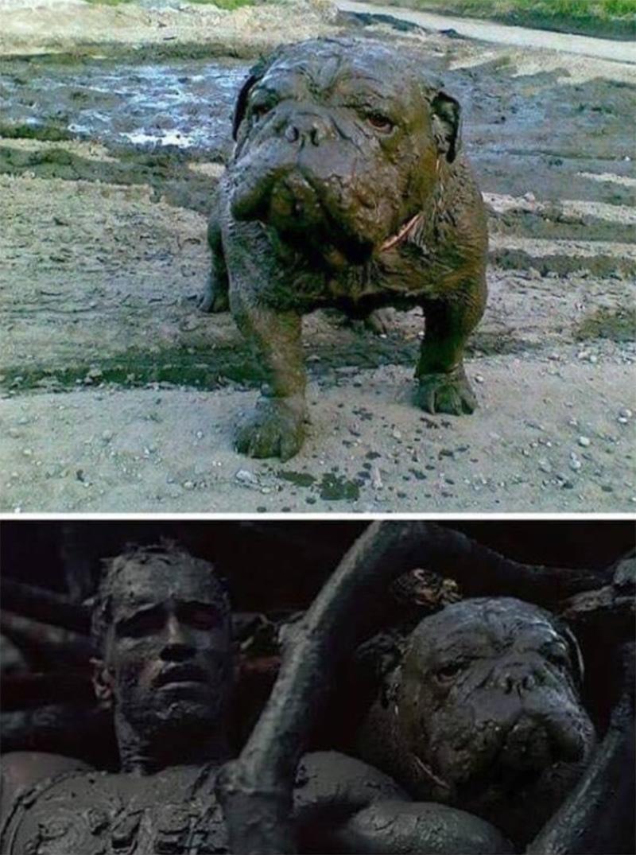 Cuando tu perro intenta ocultarse de Predator.