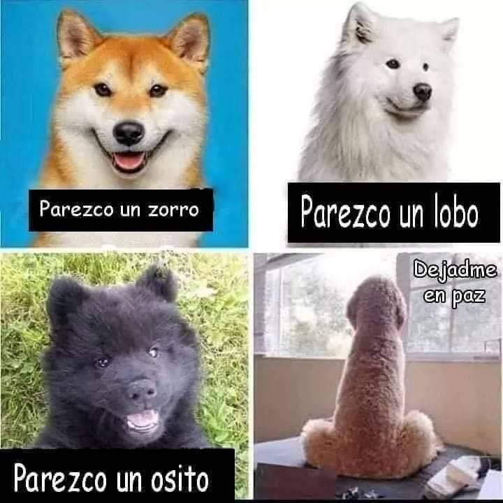 Parecidos caninos.