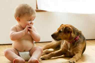 pet and baby