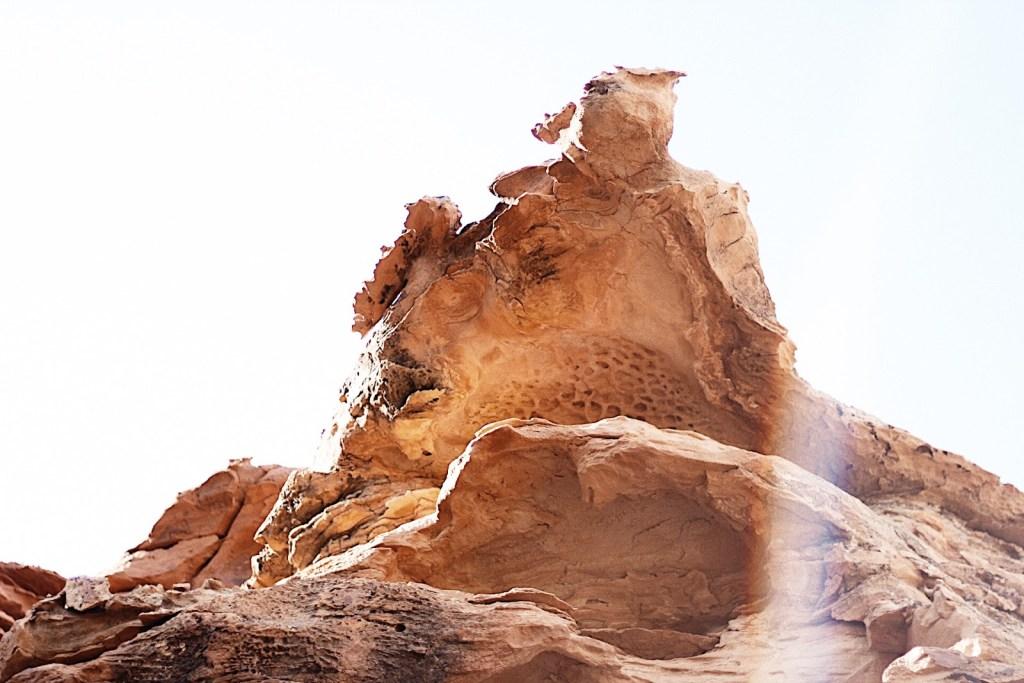 turtle rock torrey