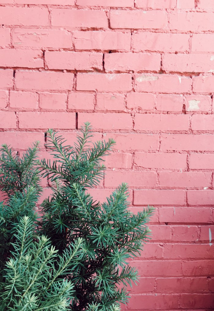 mind over matter pink wall greenery