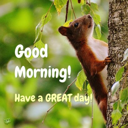 Good Morning Meme Gif Messages Happy Day Wishes