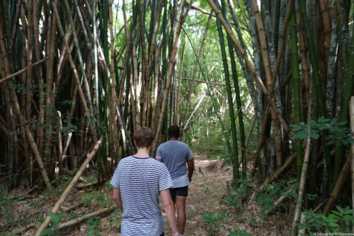 Walking in a bamboo forest