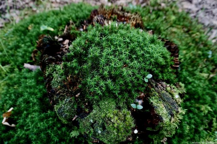 Plants on a on a tree stump in the New Forest