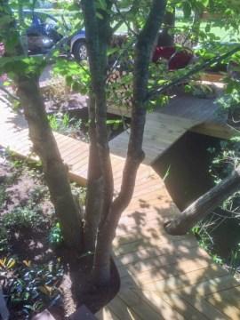 Red Snapper Walkway