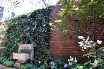 Fountain and Ivy