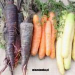 Marchewka purpurowa, pomarańczowa czy biała – którą wybrać?