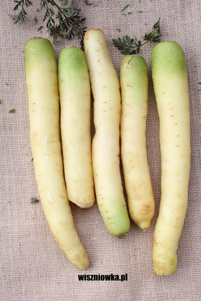 biała marchew
