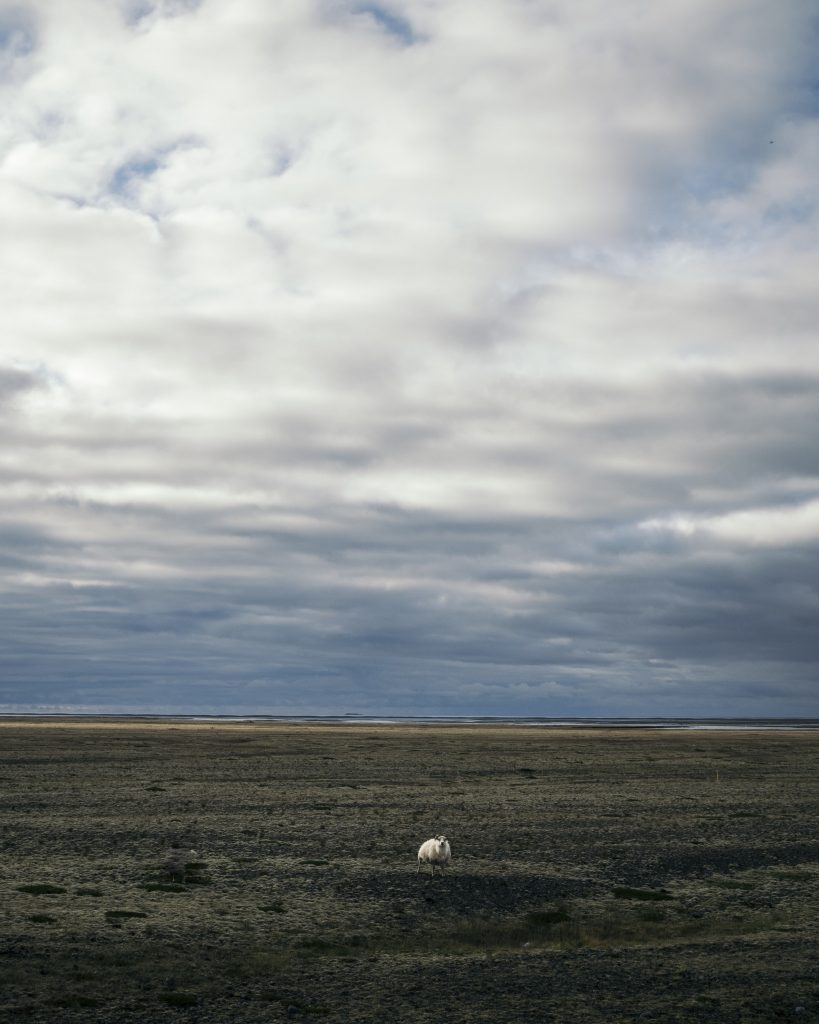 picture of vast landscape with a tiny sheep