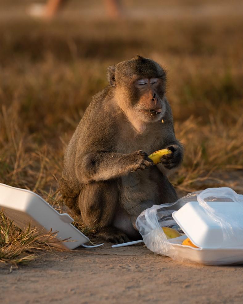 Monkey at Angkor Wat 2 - witandfolly.co