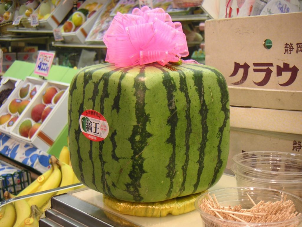 Square Watermelon - witandfolly.co