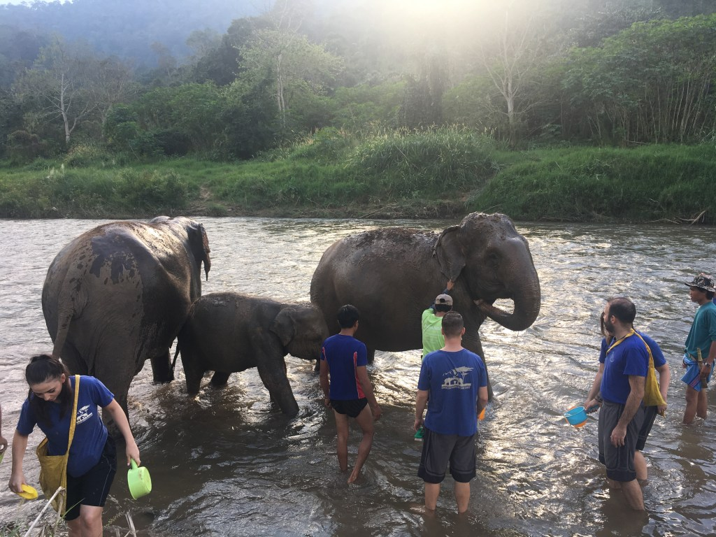 Bathing elephants in the river at Chiang Mai Mountain Sanctuary in Chiang Mai, Thailand