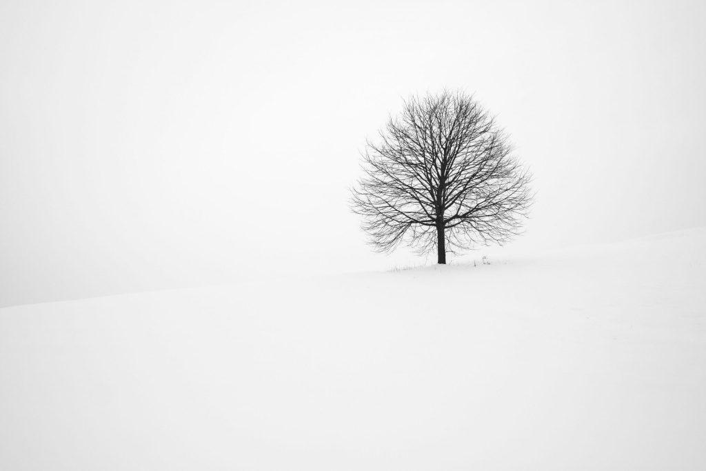 empty snow and tree