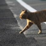 猫の不妊手術はどうして必要で時期はいつ頃やればいいの?