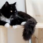 カラーボックスを縦置きすると危険!?猫のために段ボールで天板を作ろう