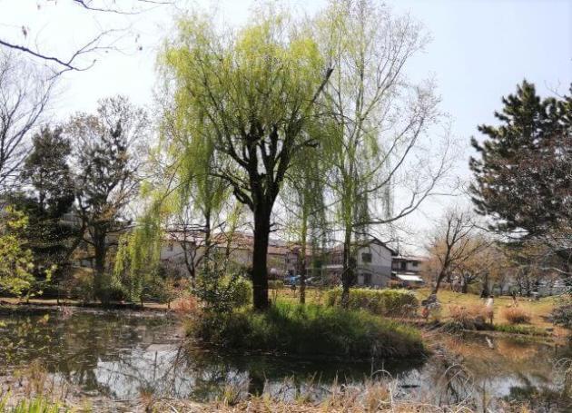 三鷹市仙川・丸池公園⑤