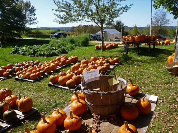 Intervale Pumpkin Patch Farm Maine