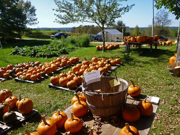 Intervale Pumpkin Patch Farm Maine
