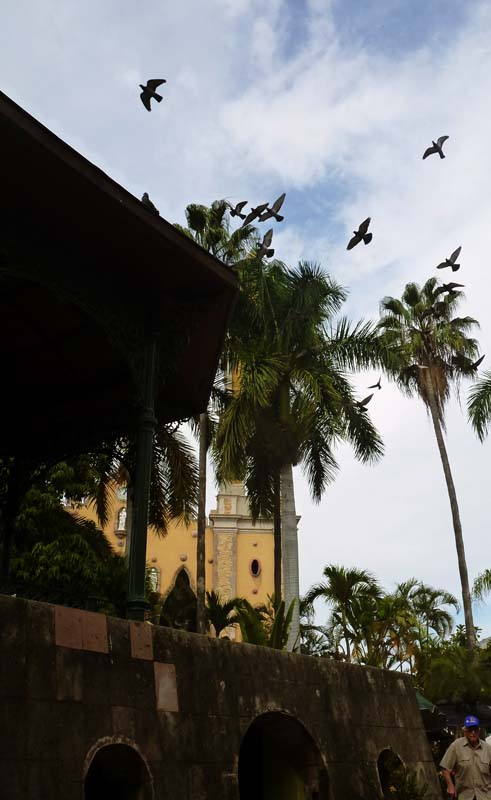 Birds and the church in the old town