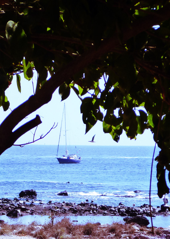 Brio at Anchor in Isla Isabela