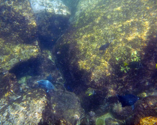Snorkelling in Acapulco