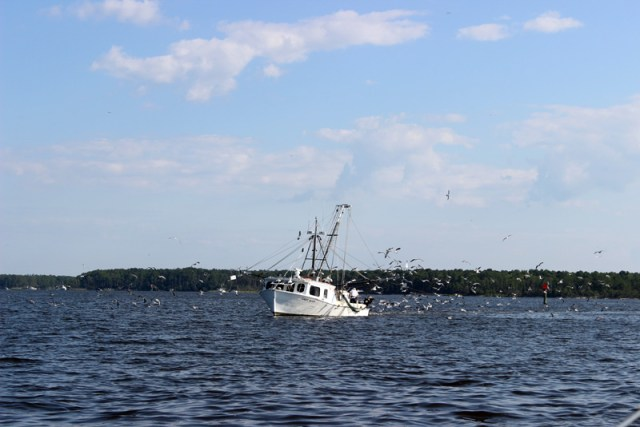 Shrimp boats North Carolina