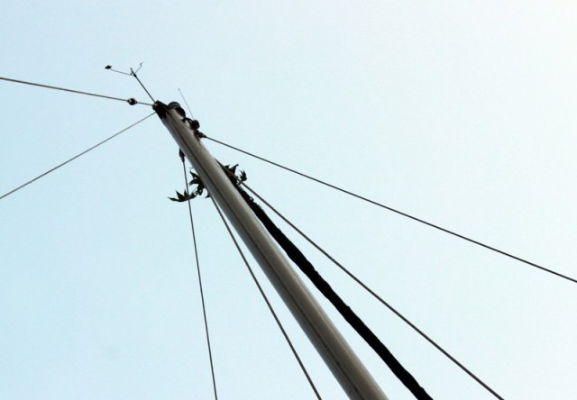 The Great Dismal Swamp - Mast AFTER